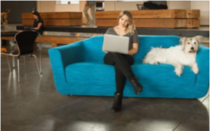 AT&T Mobility – Win one 1-year subscription to either Barkbox or meowbox and one 1-year AT&T Endpoint Security Tools and more prizes by October 31, 2015
