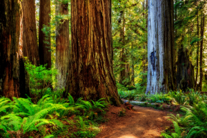 LONELY PLANET – BEST IN THE US 2018 CALIFORNIA'S REDWOOD COAST COMPETITION – Win 'a trip for two' to California's Redwood Coast