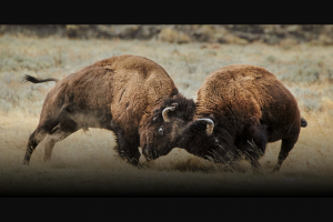 "National Geographic – Yellowstone Live – Win (1) Grand Prize is available (the ""Grand Prize"")."