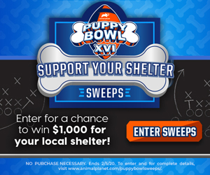 Discovery Communications – Puppy Bowl – Support Your Shelter – Win a donation of $1,000 to a non-profit animal shelter PLUS an Animal Planet swag bag