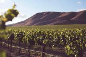 Wine Awesomeness – Wine Adventure Sardinia Sweepstakes