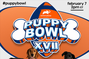 Animal Planet – Pupularity Playoffs – Win will have a donation of $5000 made in Grand Prize Winner's name to a non-profit animal shelter of the Grand Prize Winner's choice and a one year subscription to DOGTV