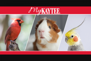 """Central Garden & Pet – Mykaytee – Win one """"Destination Nutrition Prize Package"""" consisting of the following one custom Prize Pack ($500 Value) one $500.00 prepared food ordering and delivery gift card"""