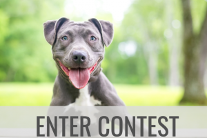 The Money Pit – $3000 Post A Picture Of Your Pet Photo Contest – Win products from Prize Provider as follows (1) $1000 gift card which can be used to purchase products at LL Flooringcom